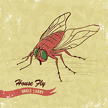 House Fly - Uncle Larry